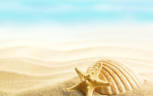 Фото обои summer, beach, sand, shells, seashells