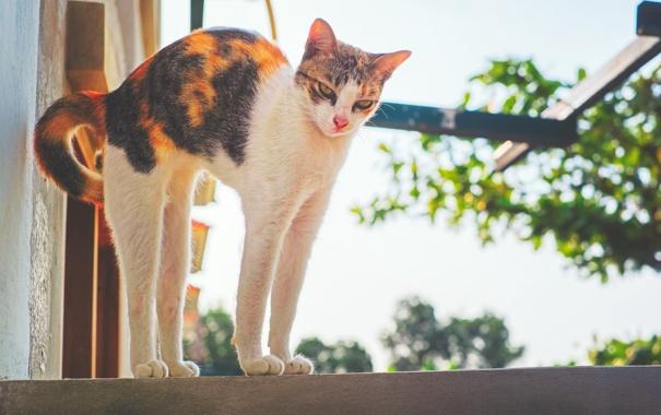 Фото обои белый, чёрный, Кошка, cat