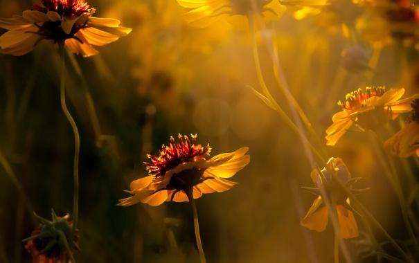 Фото обои макро, цветы, растения, желтые