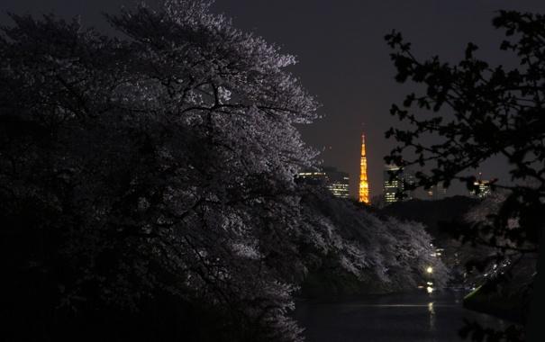 Фото обои ночь, река, весна, Город, сакура, Токио, цветение