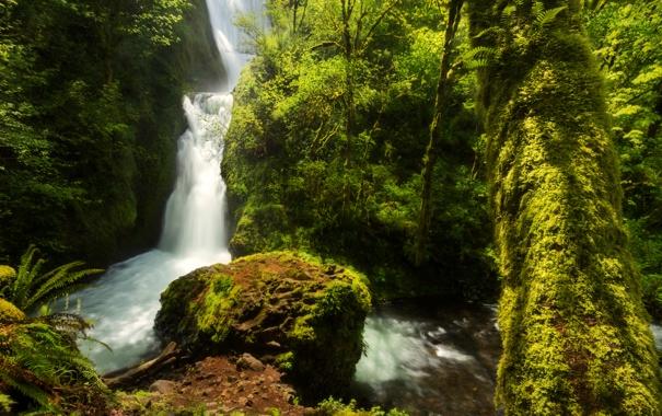Фото обои зелень, лес, деревья, водопад, мох, США, Oregon