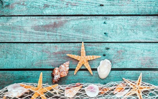 Фото обои shells, starfish, mesh