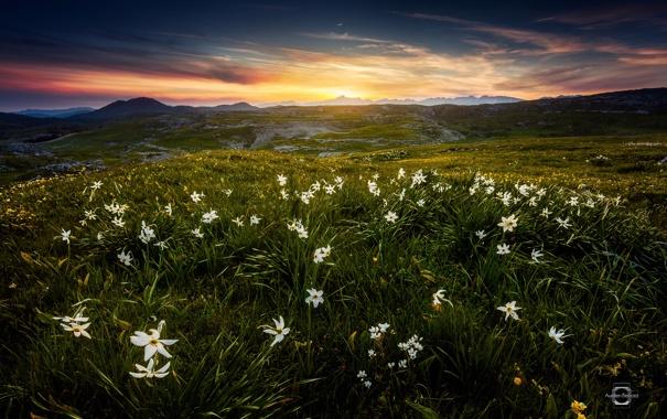 Фото обои лето, цветы, горы, Франция, утро, Альпы, Июнь