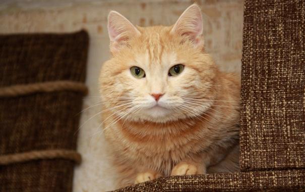 Фото обои кот, рыжий кот, кошкин дом