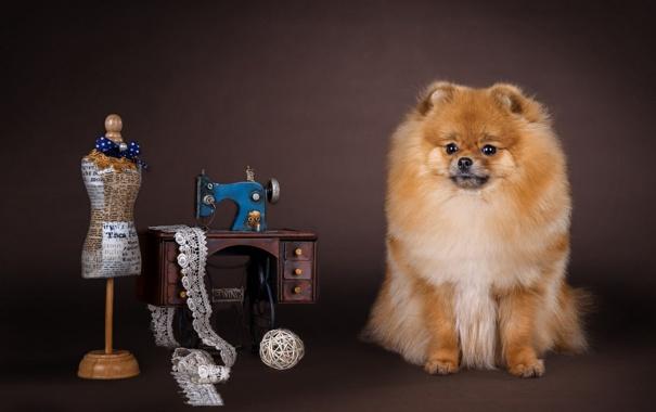 Фото обои манекен, собачка, швейная машинка