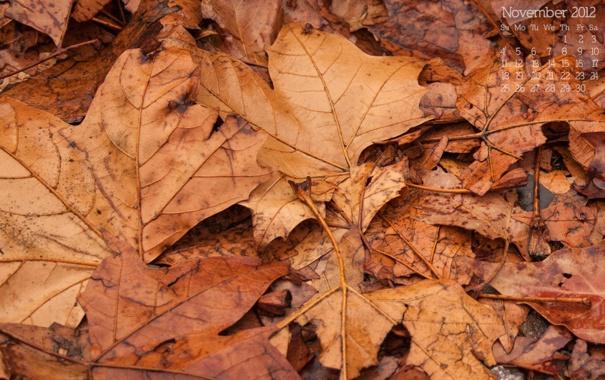 Фото обои осень, листья, листва, 2012, календарь, числа, ноябрь