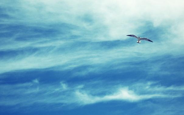 Фото обои облака, чайка, небо, фото, птица, полёт