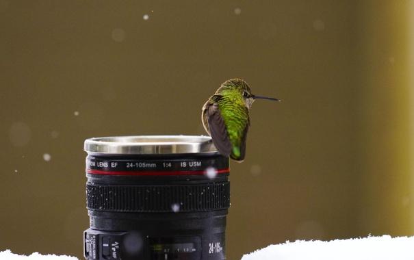 Фото обои зима, снег, птица, кружка, обьектив