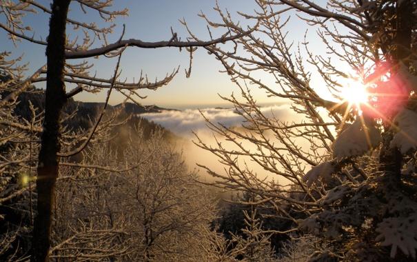 Фото обои зима, иней, солнце, лучи, снег, дерево, ветка