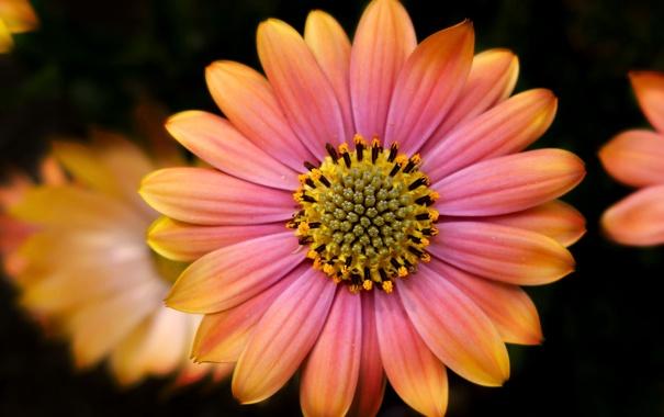 Фото обои цветок, фон, краски, лепестки