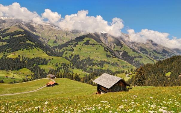 Фото обои трава, солнце, облака, деревья, цветы, горы, холмы