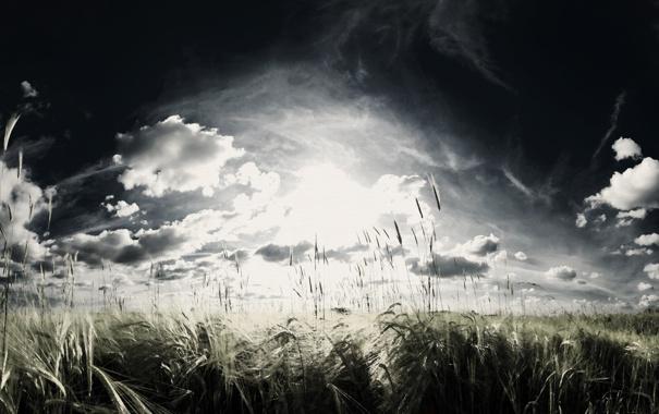 Фото обои пшеница, поле, небо, облака, злаки