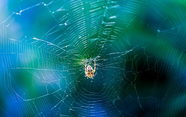 Фото обои природа, паутина, паук