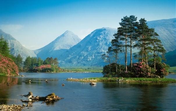 Фото обои лес, небо, вода, деревья, цветы, горы, река