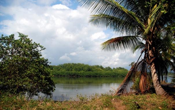 Фото обои лес, пальма, река