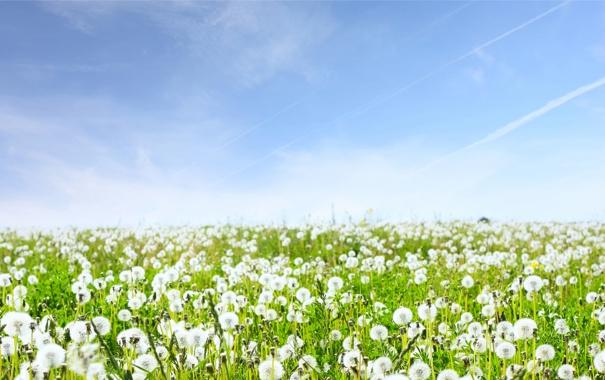 Фото обои небо, трава, цветы, природа, пейзажи, поля