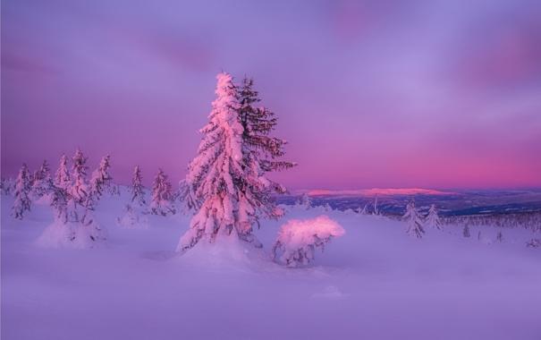 Фото обои зима, лес, снег, закат, природа