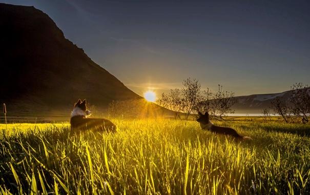 Фото обои собаки, трава, лучи, закат, горы, долина, сонце