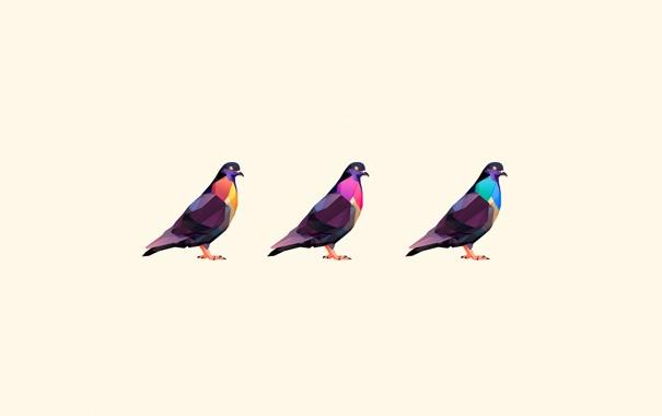 Фото обои птицы, голуби, три, окрас, цветной, белый фон