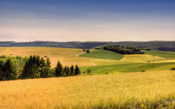 Фото обои пейзаж, трава, небо, лето, лес, германия, поле
