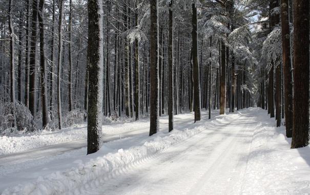 Фото обои road, trees, winter, snow