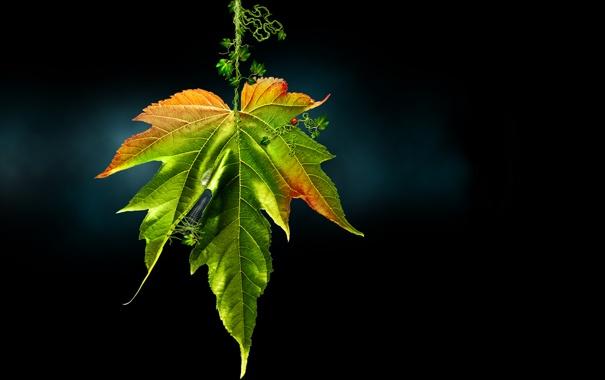 Фото обои природа, лист, maybros