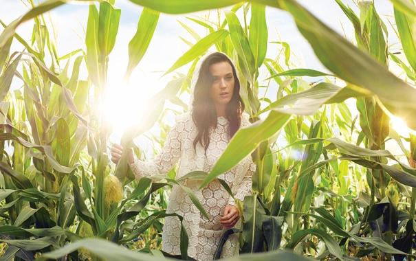 Фото обои поле, кукуруза, Katy Perry