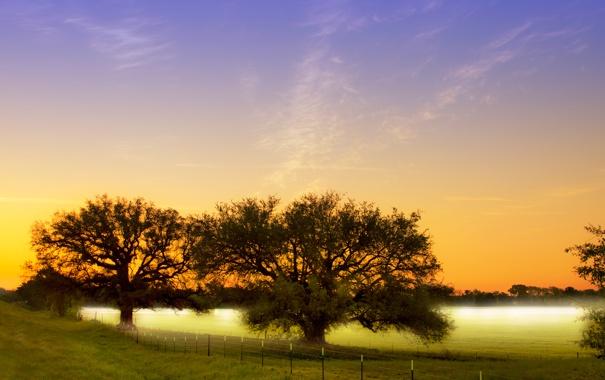 Фото обои поле, деревья, природа, туман, утро