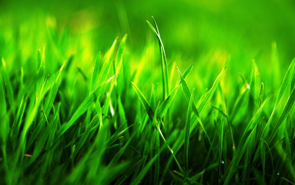 Фото обои макро, трава, зеленая