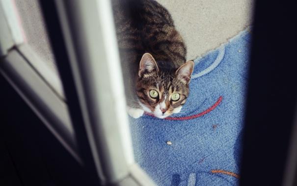 Фото обои кот, взгляд, кошка