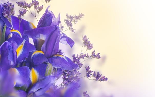 Фото обои листья, лепестки, цветение, синие, цветки, ирис