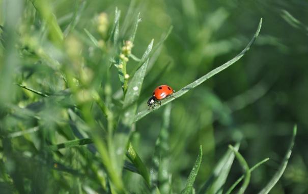 Фото обои лето, насекомые, Природа
