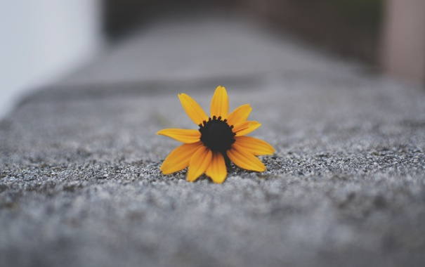 Фото обои желтые, цветок, лепестки