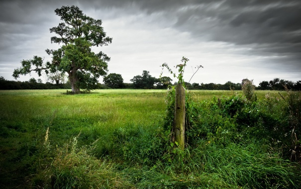 Фото обои поле, пейзаж, забор