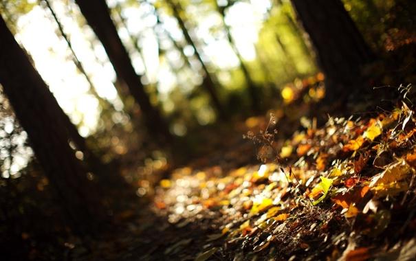 Фото обои осень, лес, трава, листья, свет, деревья, природа