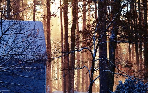 Фото обои зима, лес, листья, снег, деревья, ветки, природа