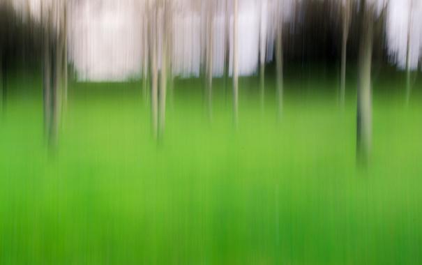 Фото обои природа, кусты, штрихи, трава, деревья