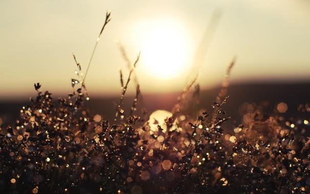 Фото обои трава, солнце, капли, природа, игра
