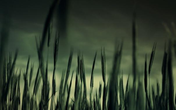 Фото обои трава, макро, сумрак
