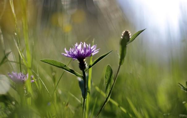 Фото обои цветок, лето, природа