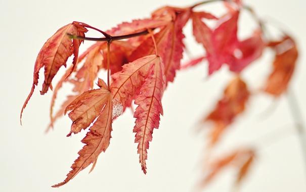 Фото обои природа, листья, осень