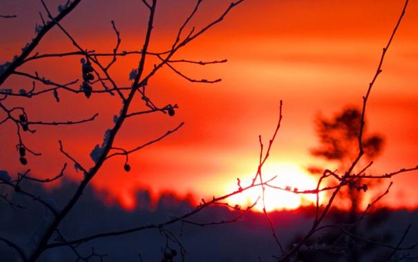 Фото обои небо, солнце, закат, ветка