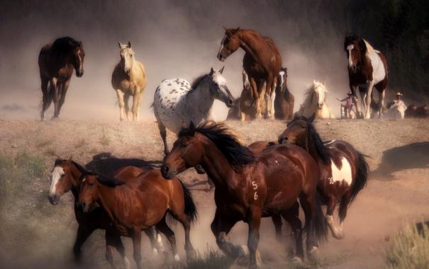 Фото обои пыль, лошади, бег, табун