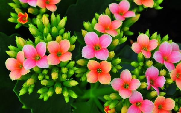 Фото обои листья, лепестки, ветка, макро, цветы