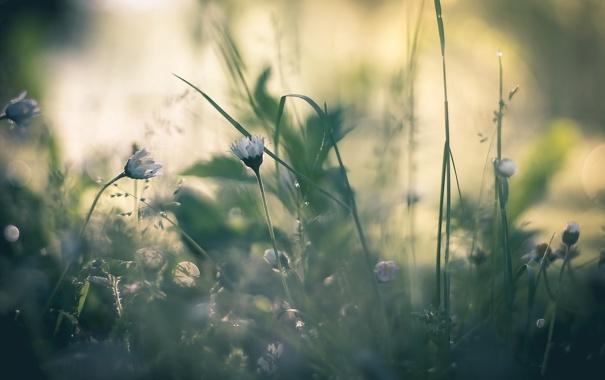 Фото обои трава, природа, фон