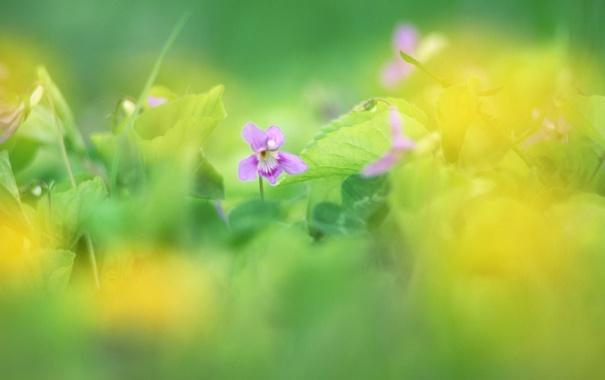 Фото обои зелень, цветок, трава, цвета, макро, цветы, природа