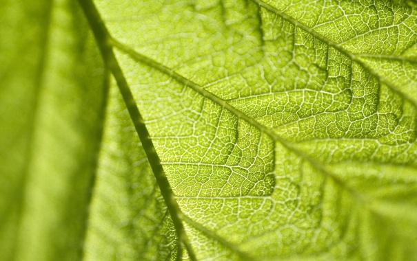 Фото обои макро, лист, зеленый