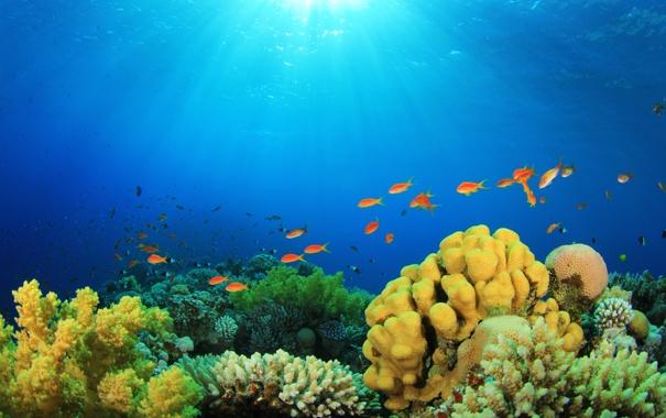 Фото обои подводный мир, underwater, ocean, fishes, tropical, reef, coral
