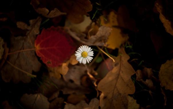 Фото обои листья, макро, цветы, фон, widescreen, обои, размытие