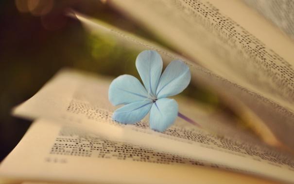 Фото обои цветок, книга, страницы